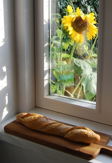 sourdough baguette sunflower